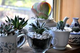 Small Picture Succulent garden care indoor and tips House Design Ideas