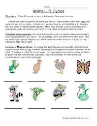 life cycle worksheets for kindergarten – newstalk.info