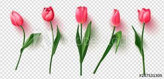 Tulipán Plakáty Obrazy A Fotografie Na Posterscz
