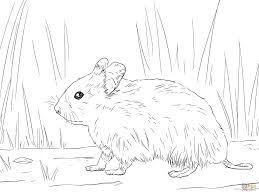 Small Picture Syrian Hamster coloring page Free Printable Coloring Pages