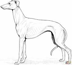 Small Picture Labrador Retriever Coloring Page In Pages And Yellow Lab glumme