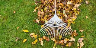 Image result for LEaf clean up