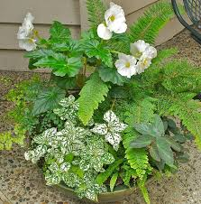 116 Best Shade Container Gardens Images On Pinterest  Gardening Container Garden Ideas For Shade