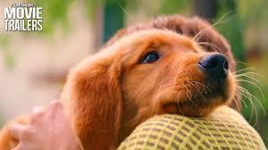 a dog s purpose bailey. Plain Bailey In A Dog S Purpose Bailey