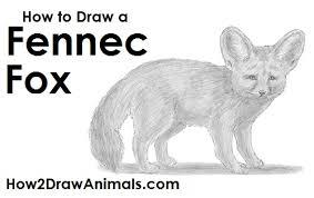 fennec fox drawing.  Fox Draw A Fennec Fox For Drawing