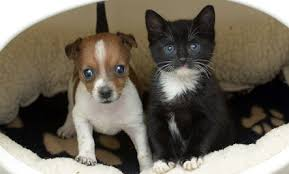 cute puppy and kitten best friends. Abandoned Puppy Orphaned Kitten Best Friends Photos On Cute And