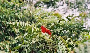 Plante care ajută la detoxifierea ficatului, articole