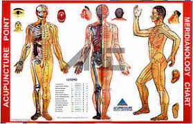 Sujok Therapy Points Chart Freeware Details About Acupuncture Meridianology Acupuncture Point Chart Set Of 3 5 Sujok Rings