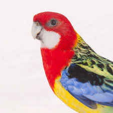 parrots for kids.  Kids Throughout Parrots For Kids P
