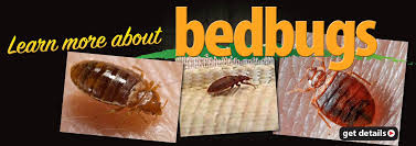 visit our blog for cur information to help understand bed bugs heat treatment thermodynamics and industry news
