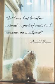 Until One Has Loved An Animal A Part Of Ones Soul Remains