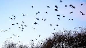 birds flying. Exellent Flying In Birds Flying W
