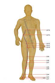 Liver Meridian Acupuncture
