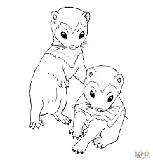 Cute Ferret Coloring Pages Get Coloring Pages