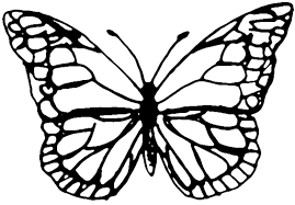 Butterfly Template Butterfly Drawing Template at GetDrawings Free for personal 1