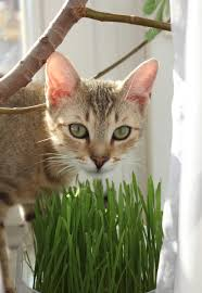 however while acknowledging the facts the other side feels there might be more grass has to offer an indoor cat than a little entertainment