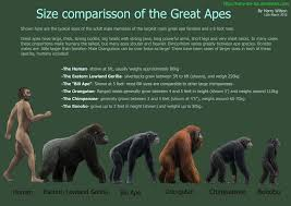 Great Ape Size Chart Wish It Didnt Have That Misspelling