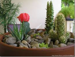 Small Picture SmallContainerCactusGardenDesign Types of containers for