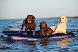 Die Richtige Abkühlung Für Hunde