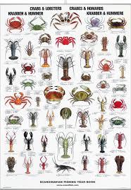 Crab Species Chart Crab Lobster Poster Crab Lobster Fish Chart Fish