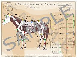 Large Laminated Jsj For Your Equine Companion Chart Of Safety Energy Locks