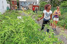 garden manager. Brilliant Manager FILE  Laura Washington Is The GM Garden Manager Of Community Garden  In To Manager E