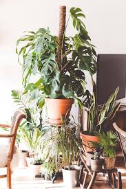 apartment gardening. Wonderful Gardening Gardening In A Really Tiny Apartment Inside A