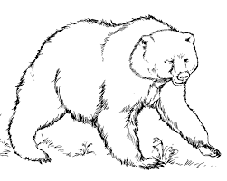 Nice Bear Coloring Pages For Kids