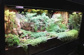 aquarium garden. Beautiful Aquarium On Aquarium Garden S