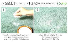 fleas in my house. How To Get Rid Of Fleas In Yard My Naturally House