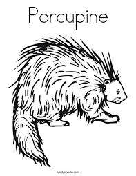 porcupine animal coloring pages