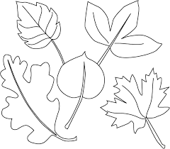 Small Picture 6 Fine Leaf Coloring Pages ngbasiccom