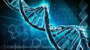 Resultado de imagen de genoma