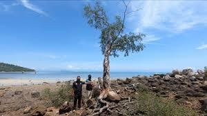 ปกป้องต้นเทียนทะเลอายุนับร้อยปี กำลังจะถูกลักลอบตัด - 77 ข่าวเด็ด