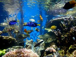 Fish Tank Filefish Tank 2jpg Wikimedia Commons