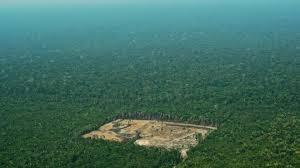 amazon rainforest. Simple Rainforest A Patch Of Deforested Land In The Amazon Rainforest To Rainforest R