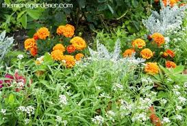 Small Picture 7 Sustainable Garden Design Tips The Micro Gardener
