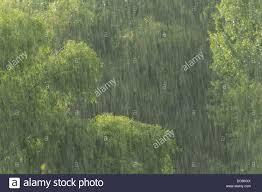 Landscape View Of Rain Shower Against Backdrop Of Woodland