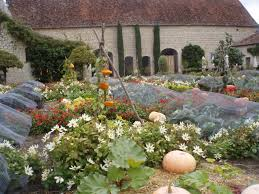 Kitchen Garden Blog Elizabeths Blog A The French Pumpkin Patch