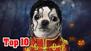 20 BEST HALLOWEEN COSTUMES FOR CATS AND DOGS!