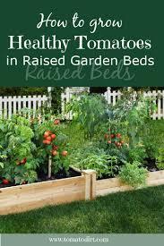 growing tomatoes in raised garden beds