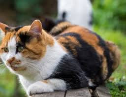 Thyroid Level Chart For Cats Hyperthyroid Disease In Cats