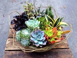 living arrangements succulent gardens 2019