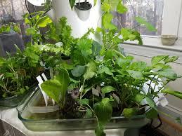 My Kitchen Garden My Kitchen Garden Travel To Wellness