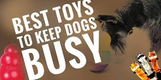 10 best toys to keep dogs busy