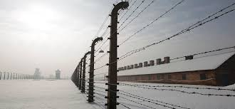 barbed wire fence holocaust. Plain Holocaust Barbed Wire Fences Are Pictured In A Snowy Scene At The Former  AuschwitzBirkenau Death Inside Wire Fence Holocaust T