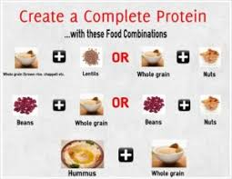 Complete Protein And Why It Is Important To You Alaskafit