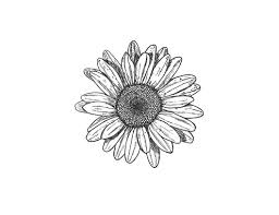 tumblr transparents black and white flowers. Unique Tumblr Black And White Flowers Tumblr Transparent For Tumblr Transparents Black And White Flowers A