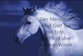Pferde Weisheiten Eine Gruppe Für Alle D