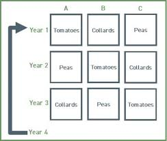 Crop Rotations And Crop Planning University Of Maryland